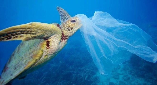Tartarugas comem plástico porque sentem cheiro de comida, diz estudo