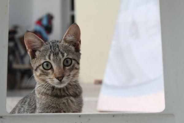 Animais domésticos precisam de cuidados diferentes durante a quarentena