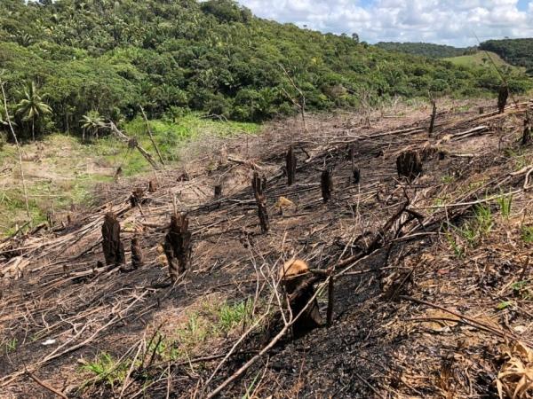 Alagoas zera desmatamento detectável na Mata Atlântica em 2019