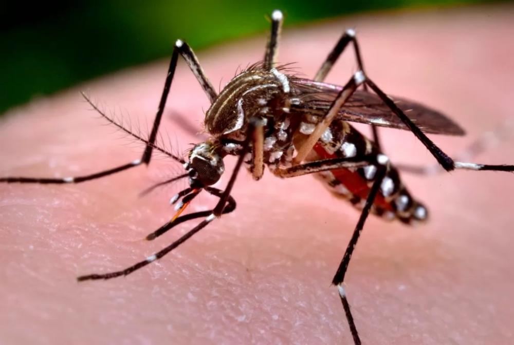 Nova linhagem do vírus da zika está em circulação no Brasil, diz estudo