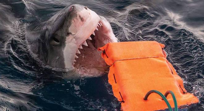 Pesquisadores criam roupa de mergulho à prova de tubarão