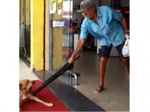 doso foi flagrado agredindo uma cachorro no interior de AL FOTO: Reprodução
