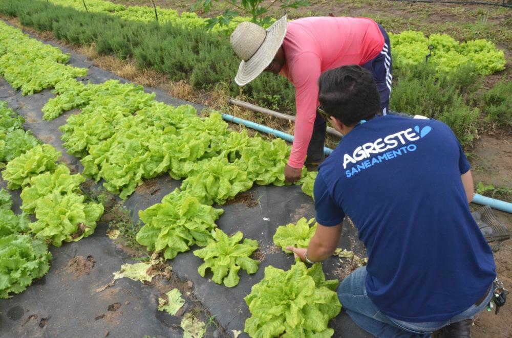 Empresa de Arapiraca é premiada por projeto que reutiliza mantas na agricultura familiar