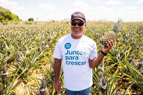 A Associação dos Produtores de Limoeiro de Anadia, que comercializa abacaxis, conquistou o mercado paulista desde 2018
