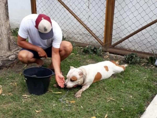 Cachorro sangrava e não tinha forças para ficar em pé FOTO: Ascom IMA